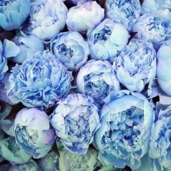 Monday Blues: Blue Hues That Inspire