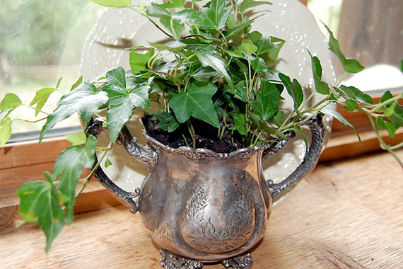 House Logic - Best Indoor Air Cleaning Plants - English Ivy Plant