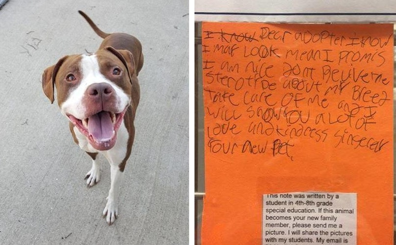 Bark Post - Children Write Notes of Shelter Dogs For Adoption - Favorite Act of Kindness