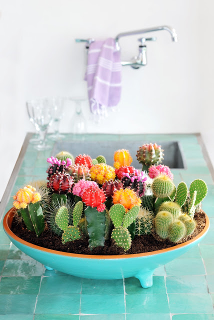 From Ezter with Love - Favorite Cacti